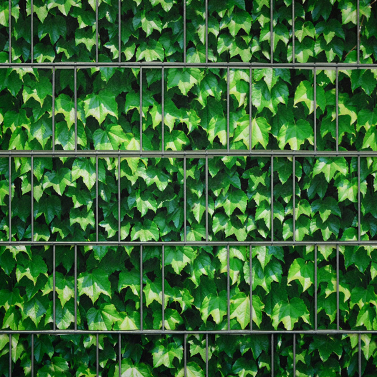 Sichtschutzstreifen Bedruckt Motiv Weinblatt Grun Sichtschutz