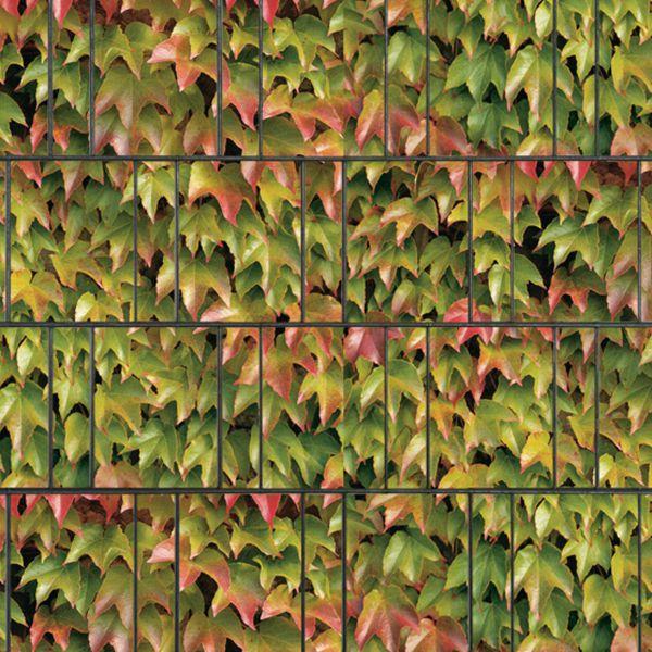 Sichtschutzstreifen bedruckt, Motiv Weinblatt bunt (Breisgau)
